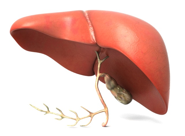 early signs of liver damage from alcohol | Yoga Aid